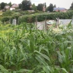 Allotment Panorama